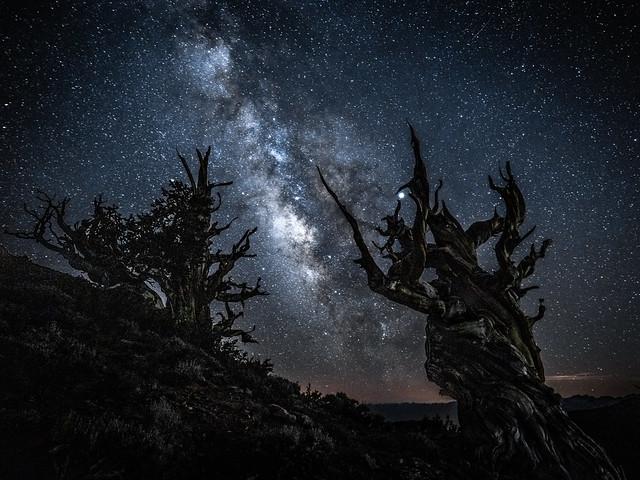 Fuji GFX100 Astro Landscape Photography Milky Way Ancient Bristlecone Pine Forest White Mountains California! Fuji GFX 100 & FUJIFILM FUJINON GF 23mm f/4 R LM WR Lens Long Exposure Night Astrolandscape Star Photography