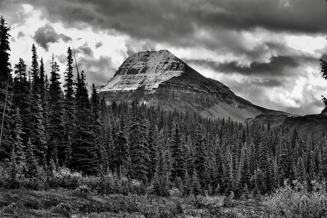 Bow Peak Beyond a Forest of Evergreen Trees (Black & White)