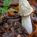 Common stinkhorn (Phallus impudicus) - Teutoburg Forest (Bielefeld, Germany)