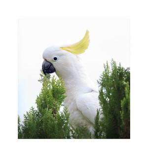Portrait of a Bird.