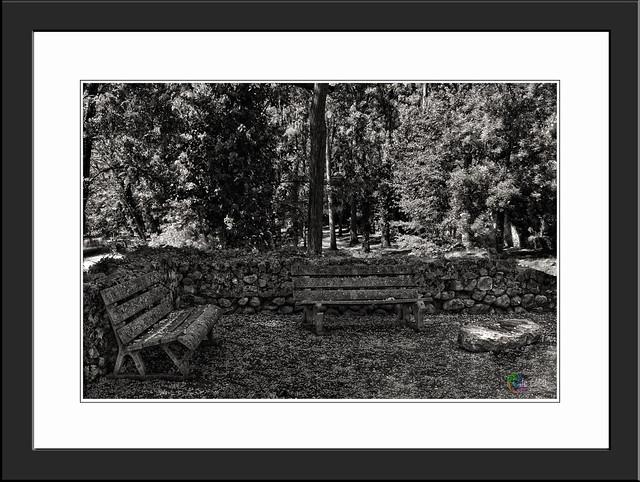 """""""Quand on voit ce que les pigeons ont fait sur ce banc, il faut remercier Dieu de n'avoir pas donné d'ailes aux vaches."""" De Régis Hauser """