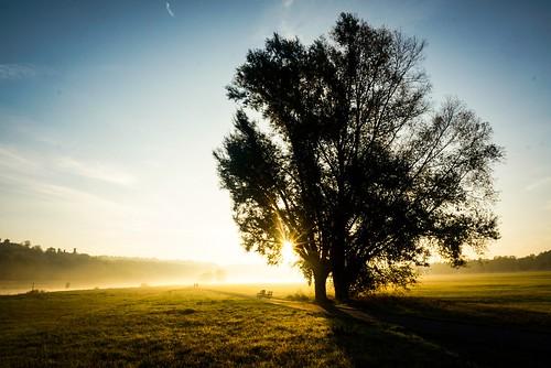 cycling sunrise commute commuting elbe goldenfog goldenhour goldenlight flare mist goldenmist misty foggy nature cityscape tree bluesky