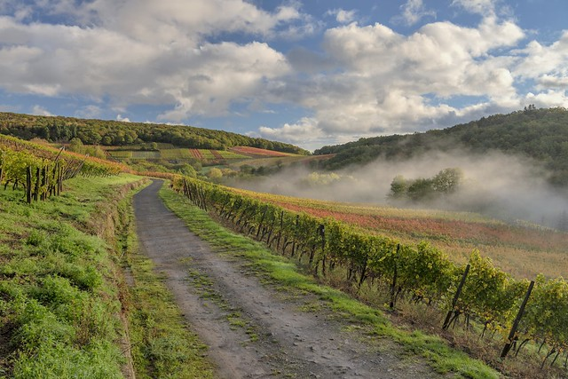 *Rotweinwanderweg im Herbst II*