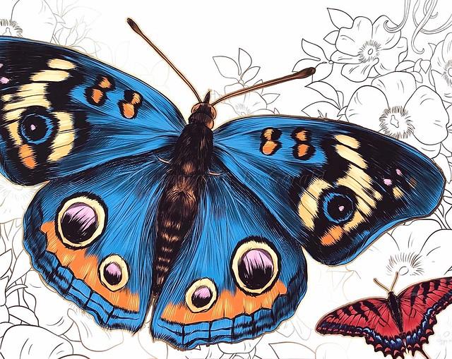 Butterflies, Not Moths
