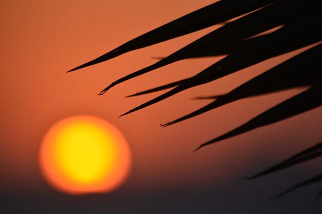 Un solete / The sun