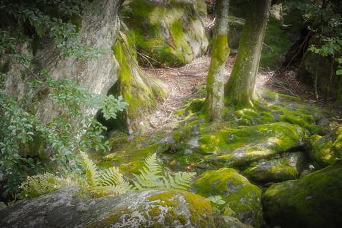 Glimpse Into the Fairies' Backyard