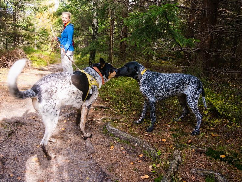 Broumowskie ściany pies