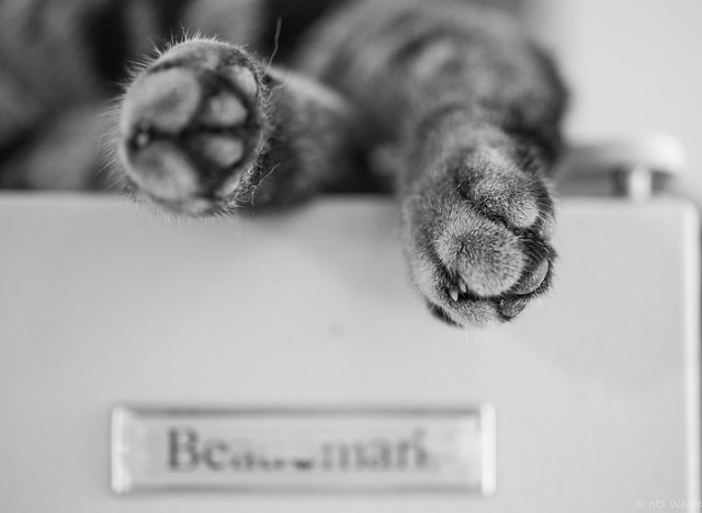 "Tales from atop the Fridge #1... fridge magnet ""cat paws"""