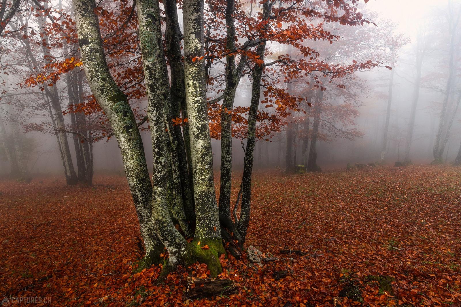 Trees - Weissenstein