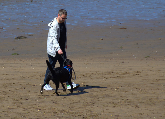 Dog walking on the beach at Scarborough