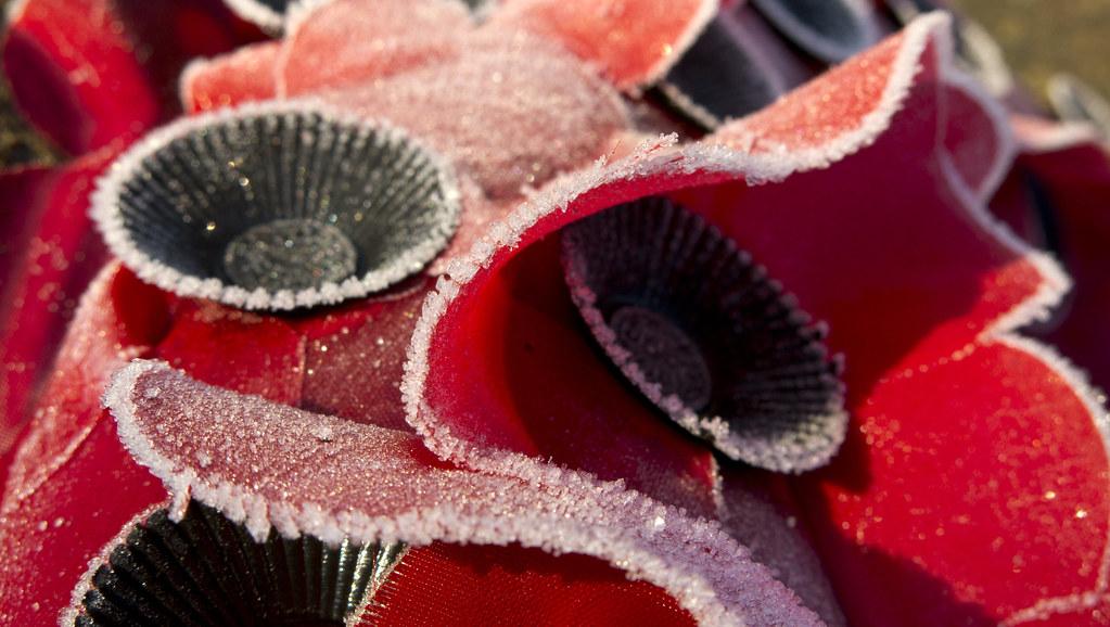 Frosty poppies
