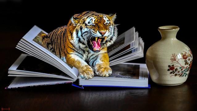 My Book  - 7592