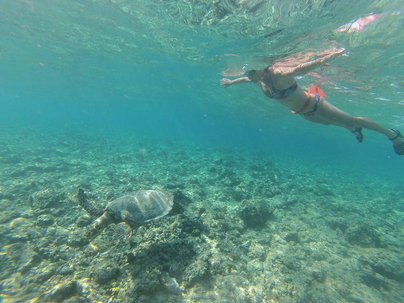 nadando con una tortuga en la isla Gili Air