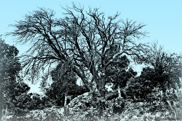 L'arbre qui déchire le ciel