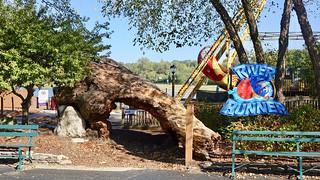 """""""River Runner"""" ride & an odd tree"""