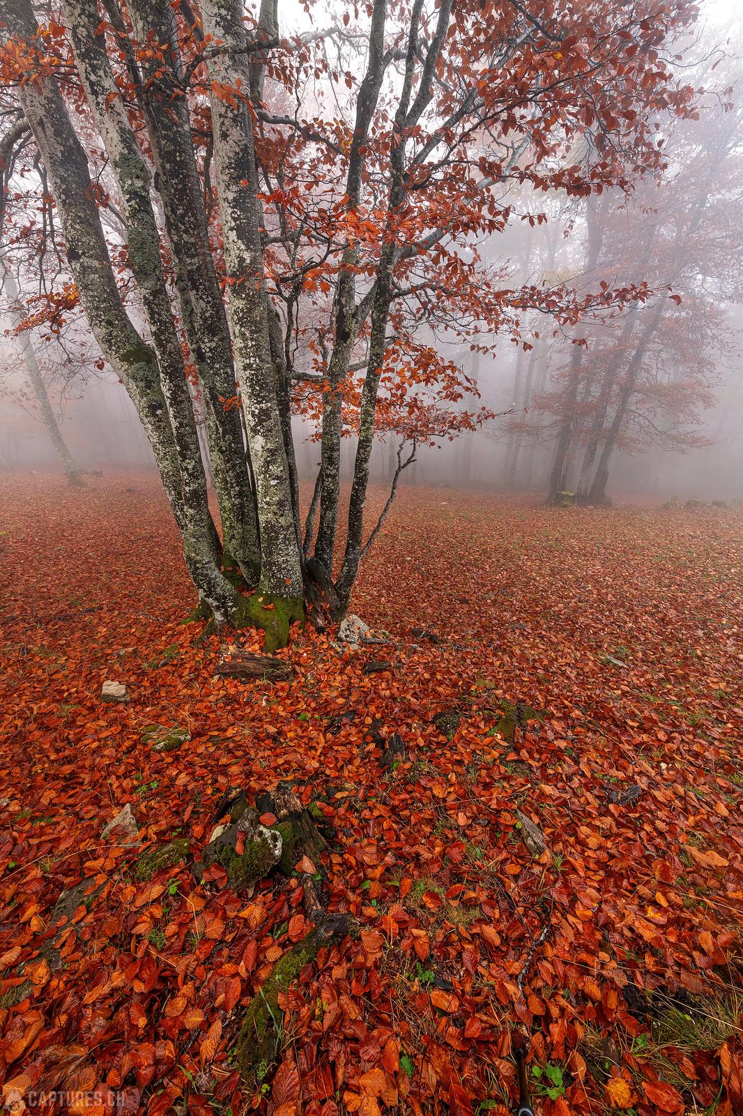 Red carpet in the forest - Weissenstein