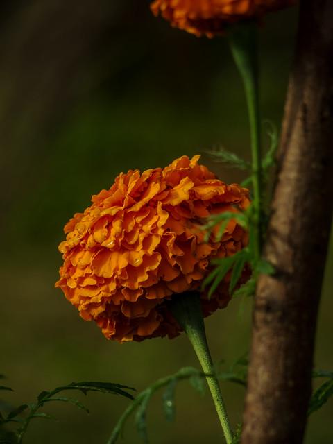 Orange flowers in community garden
