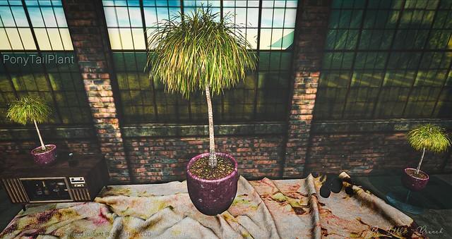 Little Branch PonyTail Plant