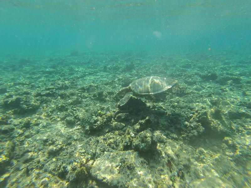 Tortuga en Gili Air