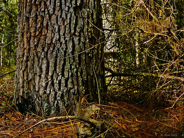 Bark/Pine Needles
