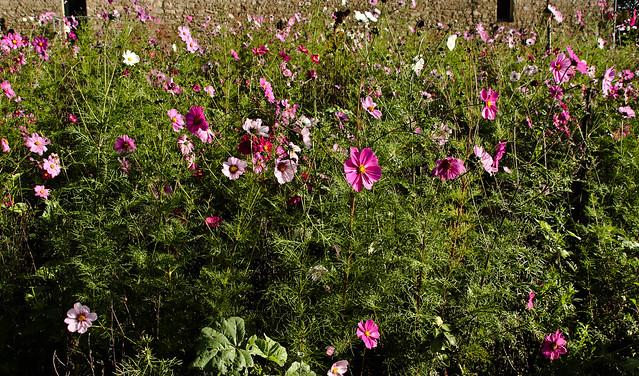 La longère fleurie