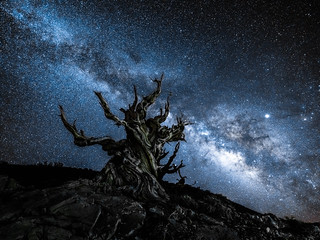 Fuji GFX100 Astro Landscape Photography Milky Way Ancient Bristlecone Pine Forest White Mountains California! Fuji GFX 100 & FUJIFILM FUJINON GF 23mm f/4 R LM WR Lens Long Exposure Night Astrolandscape Star Photography! dx4/dt=ic