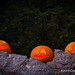 Jack-O'Lantern family visiting the Black Forest