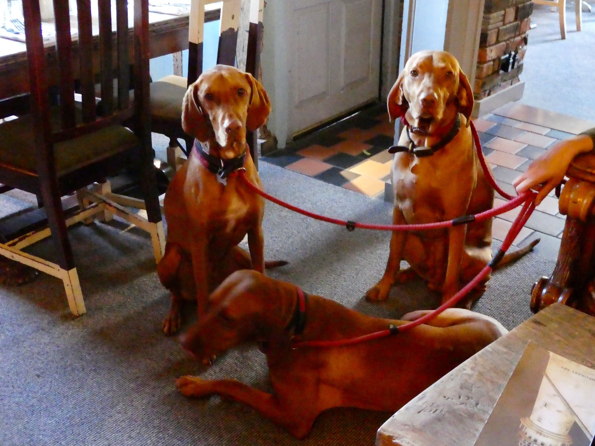 Dogs welcome at Pheasant Inn, Highclere