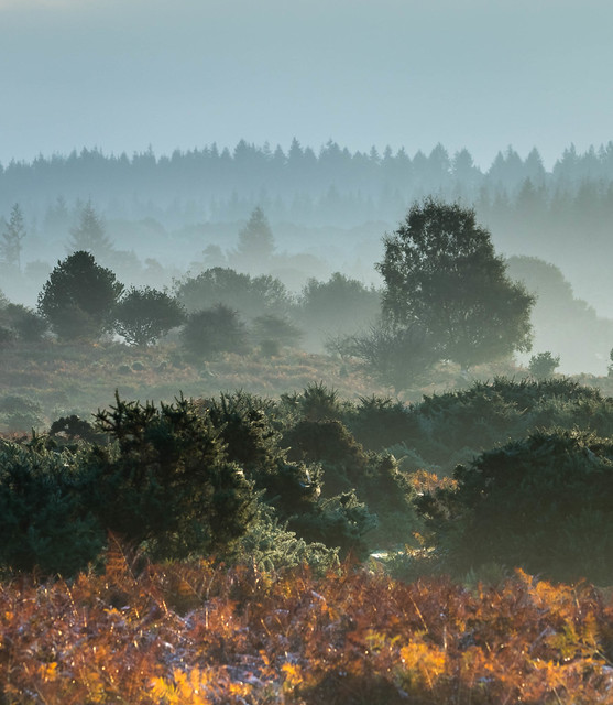 Sunrising over the New Forest