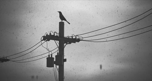 Furillen Crow -  Perspective II