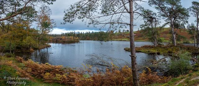Tarn Hows - Lake District UK  200155-Pano