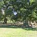 Pioneer Park Cemetery 10-22-19