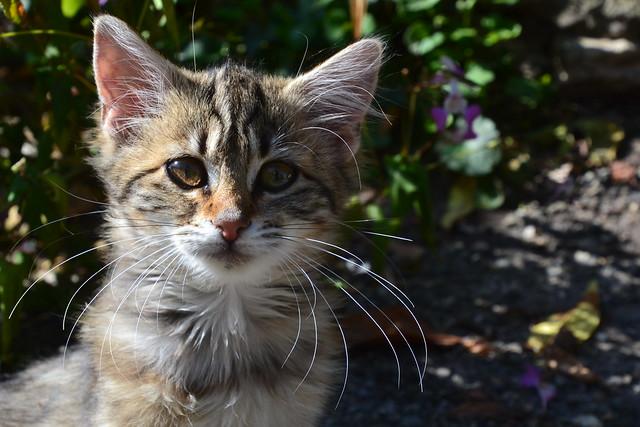 The kitten again