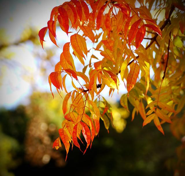 fall color flare