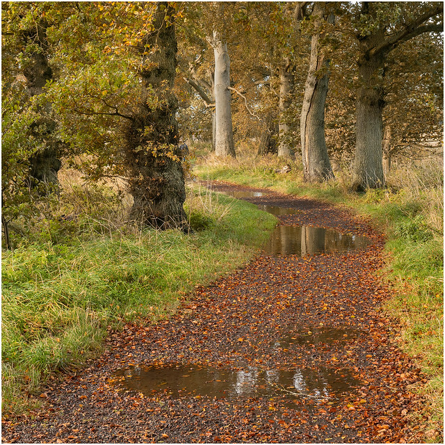 Carnoustie Woodland Paths, Pitskelly
