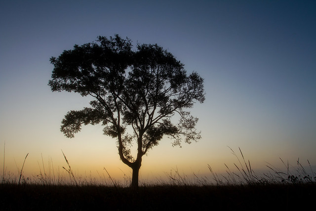 New Dawn Rising