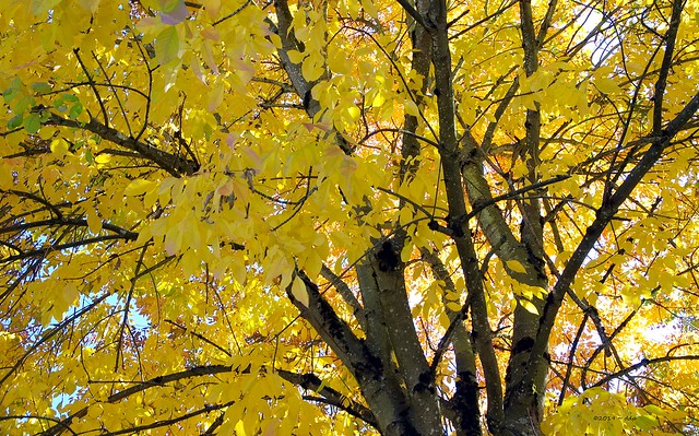 Glorious Autumn Tree
