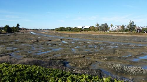 Low Tide at Belmont Slough