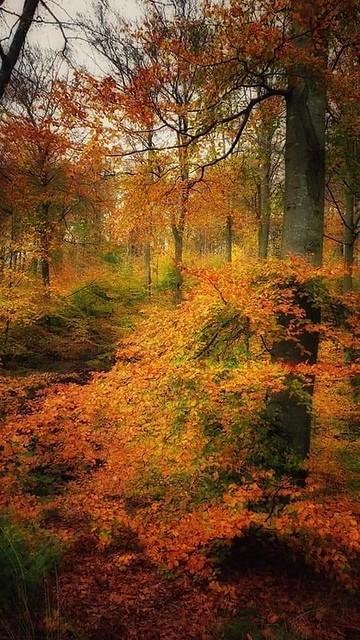 Fantastic autumn colors