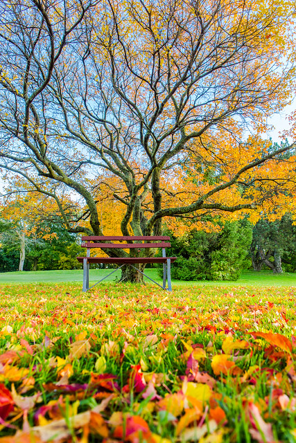 Leafy Lake Park Bench