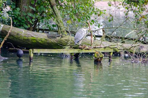 West Park, one heron