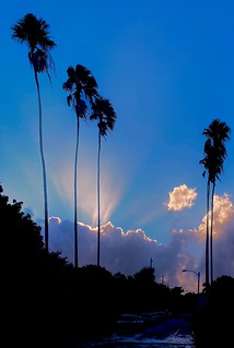 Sunset in Blue Sky with Palms