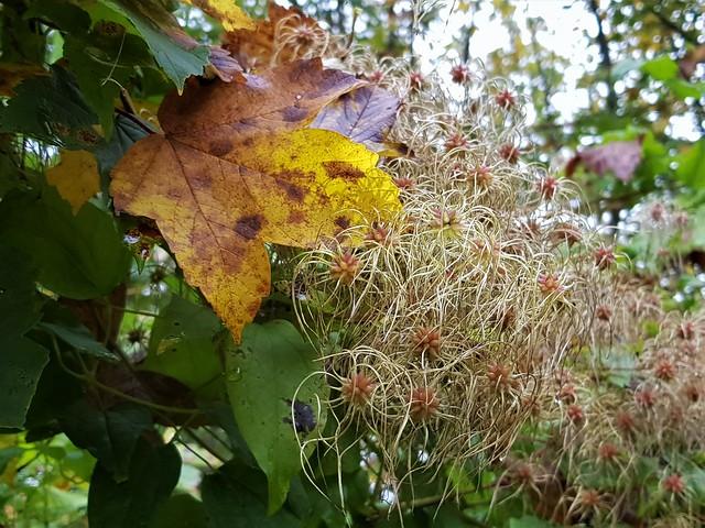 Herbst am Fluss Iller / Autumn on the river Iller / Automne sur la rivière Iller