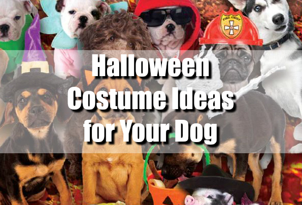 halloween costume ideas for your dog