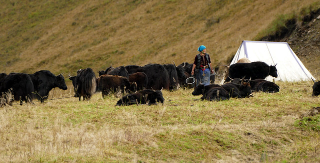 Les nomades (1)