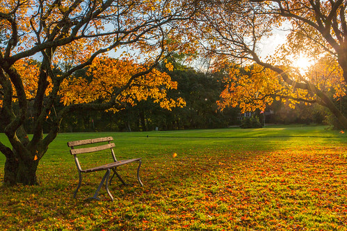 Falling Leaves Beside Bench