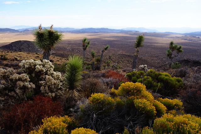 Joshua Tree National Park - southern California