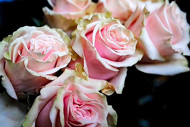 When you say that you love roses