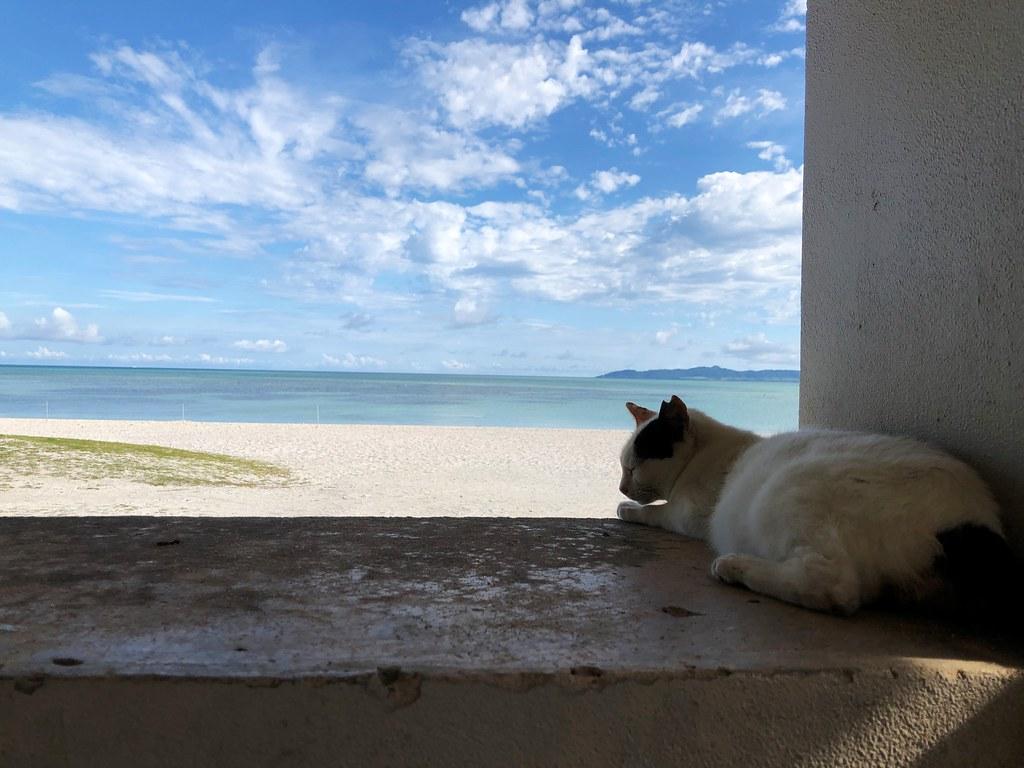 コンドイビーチと猫