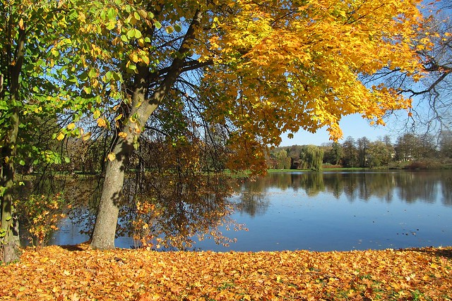 colours of Autumn :)